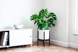 plant delivery monstera deliciosa plant delivery in the san francisco and los