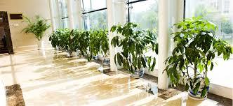 australia s most lifelike plants artificial plant shop