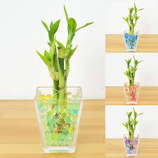 mini plants flower corp rakuten global market mini plants million bamboo