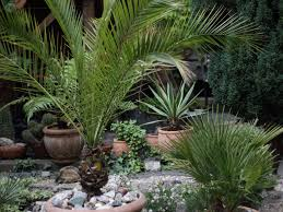 what can native australian plants teach us about business air purifying plants for your home business insider