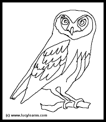desert owl coloring page owls coloring pages legend of guardian