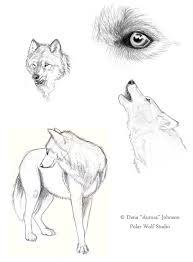 wolf sketches by polarwolfstudio on deviantart