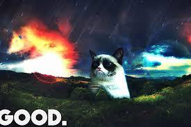 Good Grumpy Cat Meme - grumpy cat and the thriving cat meme marketplace