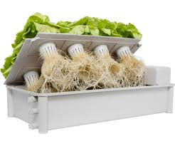 box hydroponic salad garden kit and grow plants
