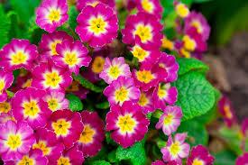best perennial flowers to thrive in northern utah millcreek gardens