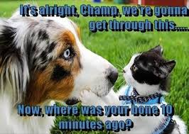australian shepherd funny funny animal pictures of the day 28 pics