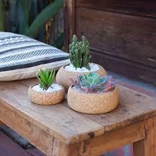 Succulent And Cacti Pictures Gallery Garden Design Artisan Vessels For The Indoor Gardener Gallery Garden Design