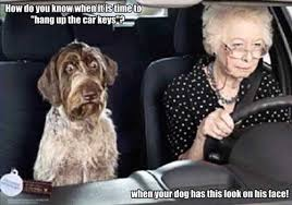 Dog In Car Meme - hilarious dog pictures page 16