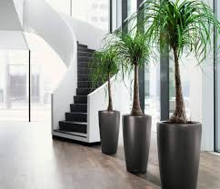 creative interior plant design ideas interior gardens
