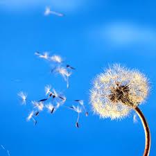 sul vento