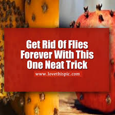 How To Get Rid Of Backyard Flies by Get Rid Of Flies Forever With This One Simple Trick