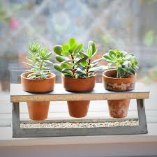 13 succulents that are native succulent trio in a galvanized z stand succulent plants gift