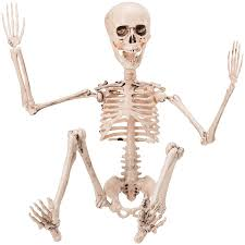 Halloween Posable Skeleton Amazon Com Prextex 19 U201d Posable Halloween Skeleton Full Body
