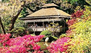 Botanical Gardens Golden Gate Park by Springtime Is Prime Season In The City By The Bay Bay City Guide