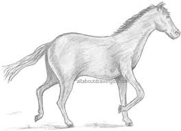 photos horse easy drawing pencil drawing art gallery
