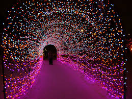Lights At The Zoo by Holiday Things To Do In Calgary Under 25 Flipboard Com
