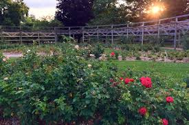 family garden longmont 100 family garden columbus oh lisa miller ohio plants 51