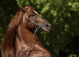 How To Tell If A Horse Is Blind The Animal Whisperer Pet Communicator Talk To Animals