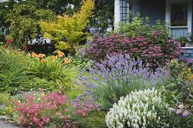 california native plant gardens 17 low maintenance landscaping ideas u2013 chris and peyton lambton