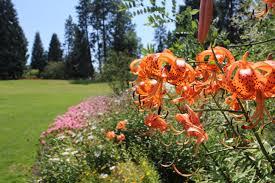 file flowers at summerland ornamental gardens jpg wikimedia commons