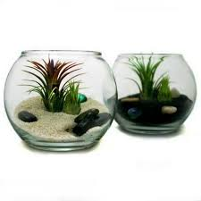 decor plants home unusual air plants home decoration inspiration ideas and gifts