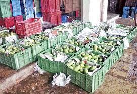 vashi market dasheri mangoes arrive at vashi s apmc market news