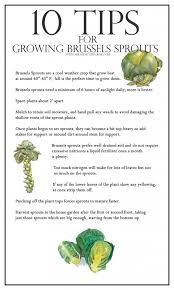 best 25 growing cabbage ideas on pinterest growing vegetables