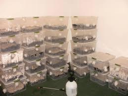 monotub grow room setup advice wanted deleted mushroom
