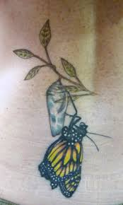 butterfly cocoon designs search things i just
