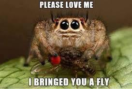 Sad Spider Meme - cool misunderstood spider meme i usually take spiders outside to set