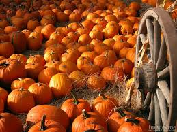 pumpkin screensavers thanksgiving backgrounds 65 wallpapers u2013 hd wallpapers