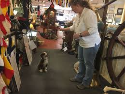 australian shepherd jobs a new dog has his day at portsmouth nautical shop mini australian