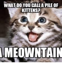 Kittens Memes - 25 best memes about kitten rawr kitten rawr memes