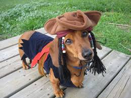 Cheap Dog Costumes Halloween 25 Dachshund Costume Ideas Dachshund
