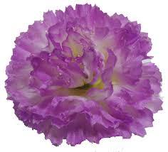 purple carnations purple carnation hair flower