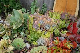 succulent house garden ideas succulent house plants mini succulents small