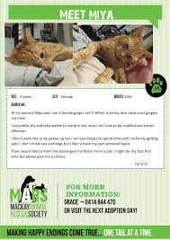 adopt a cat mackay animal rescue society