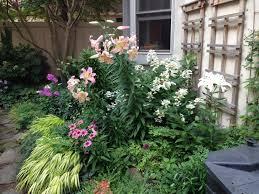 Urban Gardening Philadelphia - photos of our gardens earthly delights in philadelphia