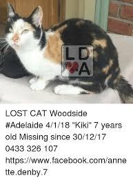 Lost Cat Meme - lost cat woodside adelaide 4118 kiki 7 years old missing since