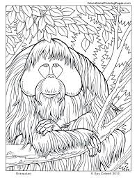 coloring pages nature animals coloring