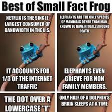 Fact Frog Meme - best of small fact frog by dayne meme center