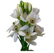 fresh flowers in bulk bulk of bethlehem flower at wholesale price flowers in bulk