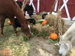 tales from beacon hollow farm a barnyard thanksgiving dinner