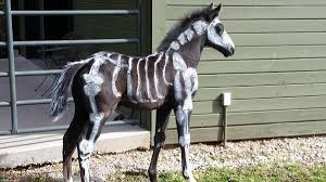 halloween horse ffff just in time for halloween meet casanova the u0027walkaloosa u0027