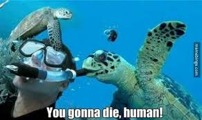 Turtle Memes - you gonna die human turtle memes and comics
