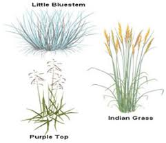 illustration of meadow plants grow guides plants