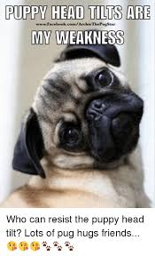 Head Tilt Meme - puppy head tilts are wwwfacebookcomarchie thepugstar my weakness who