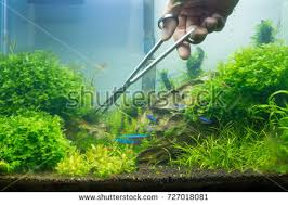 Aquascape Tank Aquascaping Stock Images Royalty Free Images U0026 Vectors Shutterstock