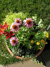 100 small container garden metal trough used as container