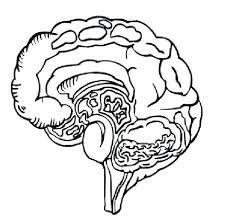 Human Body Coloring Page Human Body Coloring Pages In Human Body Brain Coloring Page